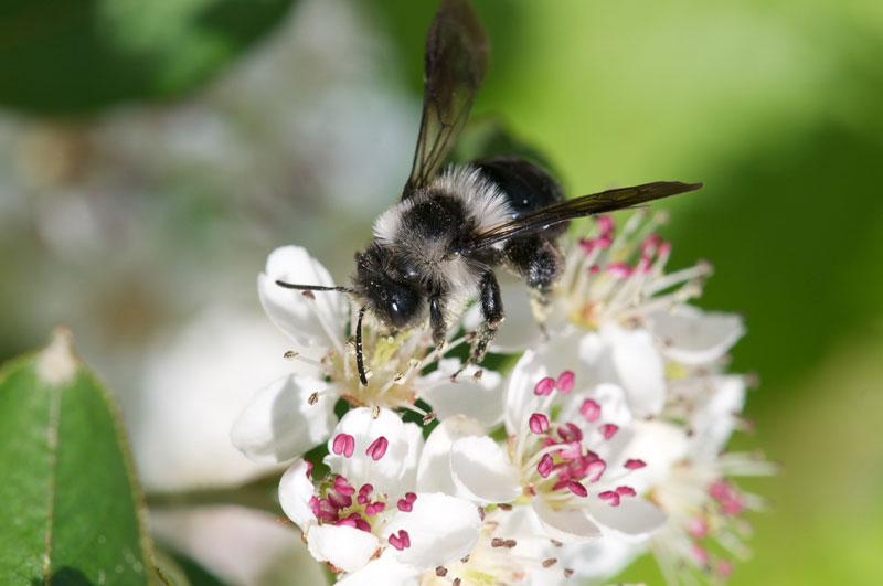 Bienen-Handbücher